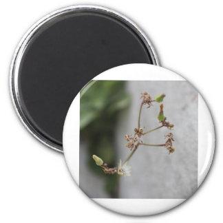 Summer Wish Weed 6 Cm Round Magnet
