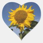 Sunflower against blue sky heart sticker