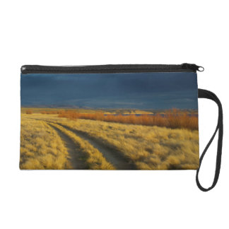 Sunset highlights the red bark of bushes wristlets
