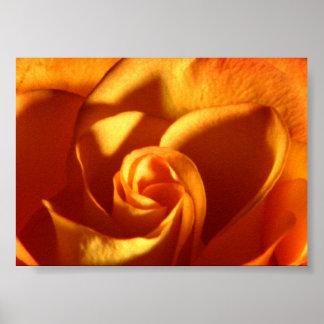 Sunset Rose Beautiful Nature Photography Poster