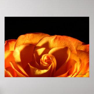 Sunset Rose Poster