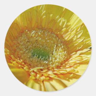Sunshine Yellow Gerbera Daisy Round Sticker