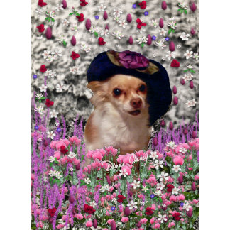 Chi Chi in Flowers - Chihuahua