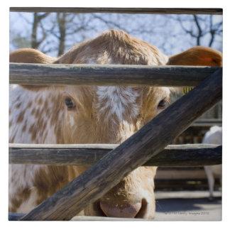 Swedish mountain cattle (Skansen) Large Square Tile