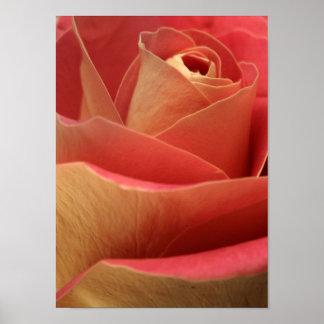 Sweetheart Rose Poster