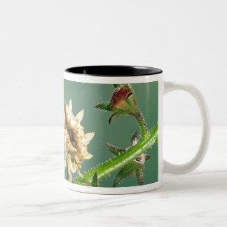 Tanzanian Flower Mantis, Pseudocreboter Two-Tone Mug