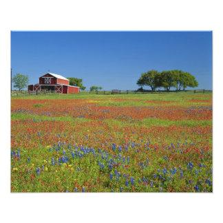 Texas, Texas Hill Country, Texas paintbrush Photograph