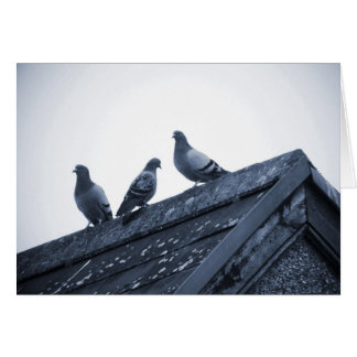 Three Pigeons on a Roof Greeting Card