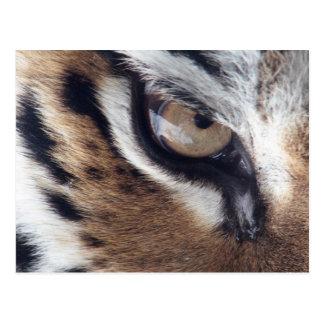 tigers eye postcard