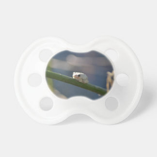 Tiny River Frog Pacifier