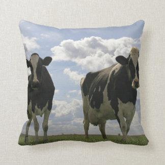Two Friesian cows Cushion