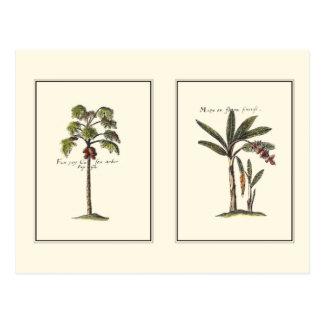 Two Miniature Framed Palm Trees Postcard