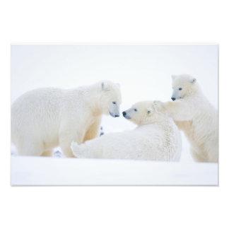 USA, Alaska, 1002 Coastal Plain of the Arctic Photo Print