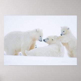 USA, Alaska, 1002 Coastal Plain of the Arctic Poster