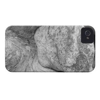 USA, Alaska, Juneau, Detail of bleached log on iPhone 4 Covers