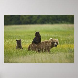 USA, Alaska, Lake Clark National Park. A Poster