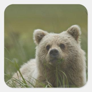 USA, Alaska, Lake Clark National Park. A Square Sticker