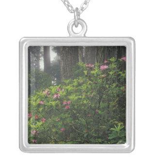 USA, California, Del Norte, Redwoods St. Park, Square Pendant Necklace