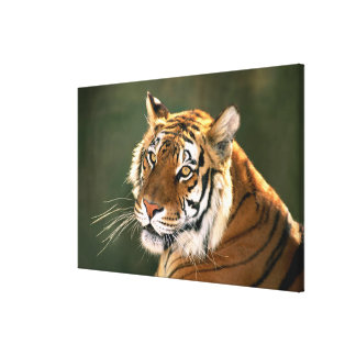 USA, California, Los Angeles County. Portrait Canvas Print