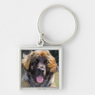 USA, California. Portrait Of Leonberger Sitting Silver-Colored Square Key Ring