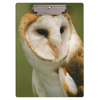 USA, Colorado, Broomfield. Barn owl Clipboards