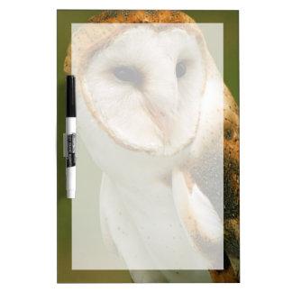 USA, Colorado, Broomfield. Barn owl Dry Erase White Board
