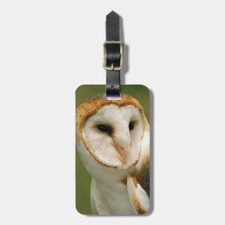 USA, Colorado, Broomfield. Barn owl Luggage Tag
