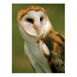 USA, Colorado, Broomfield. Barn owl Postcard