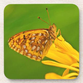 USA, Colorado. Skipper butterfly on sunflower Coaster