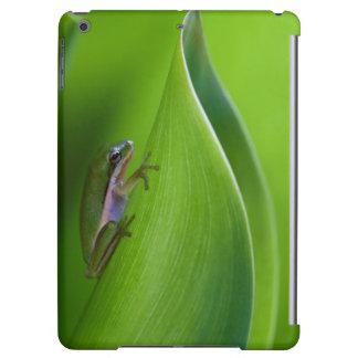 USA, Georgia, Savannah, Tiny Frog On A Leaf