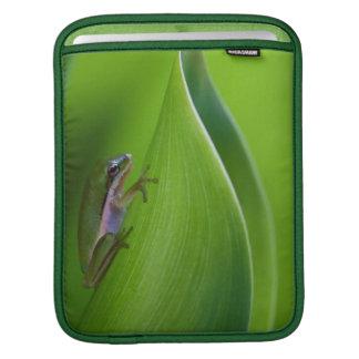 USA, Georgia, Savannah, Tiny Frog On A Leaf iPad Sleeve