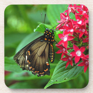 USA, Kansas, Butterfly On Red Flowers Beverage Coasters