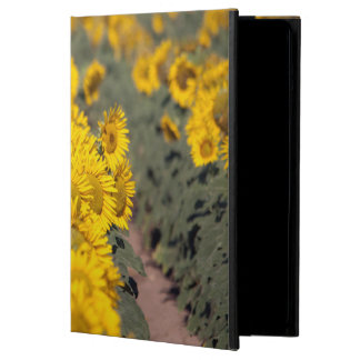 USA, Kansas. Sunflowers (Helianthus Annuus) Case For iPad Air