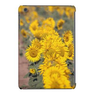 USA, Kansas. Sunflowers (Helianthus Annuus) iPad Mini Covers
