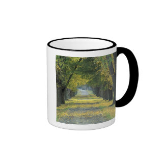 USA, Kentucky, Louisville. Tree-lined road in Ringer Mug