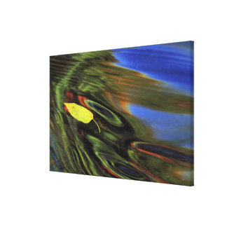 USA, Michigan, Birch leaf in river with autumn Canvas Prints