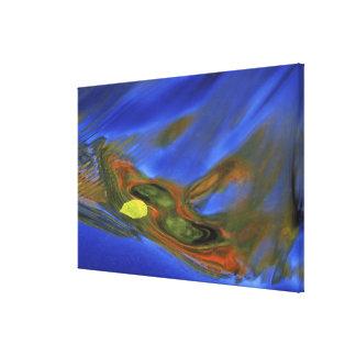 USA, Michigan, Upper Peninsula, birch leaf in Stretched Canvas Prints