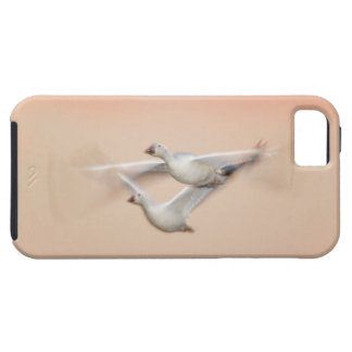 USA, New Mexico, Bosque del Apache National 3 iPhone 5 Covers