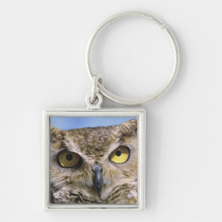 USA, Oregon, Bend. Great Horned Owls are common Silver-Colored Square Key Ring