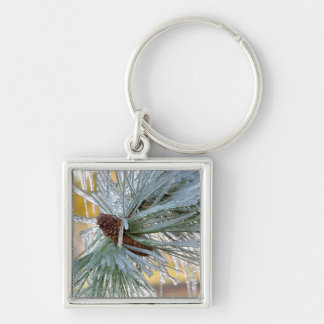 USA, Oregon, Bend. Ponderosa pine needles are Silver-Colored Square Key Ring