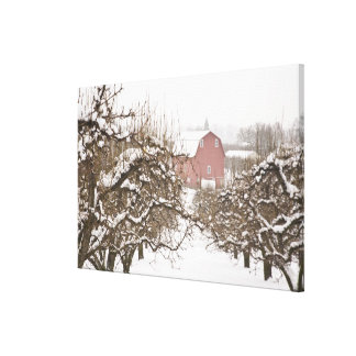 USA, Oregon, Hood River. Snow covered Apple Stretched Canvas Prints