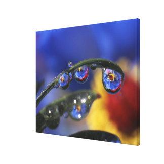 USA, Oregon, Portland, Close-up of ladybird Stretched Canvas Print