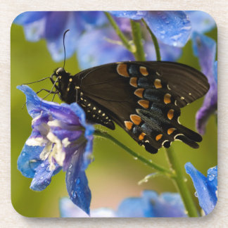 USA, Pennsylvania. Close-up of butterfly Coasters