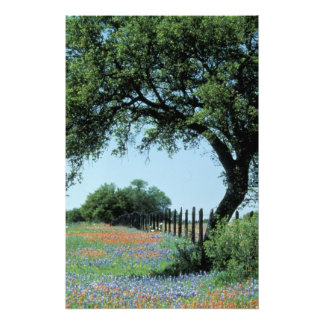 USA, Texas, Texas Hill Country Paintbrush and Photographic Print