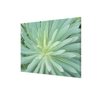 USA, Washington, Bellevue, Bellevue Botanical 4 Stretched Canvas Print