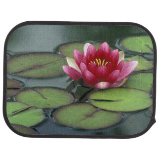 USA, Washington State, Seattle. Water lily and Floor Mat