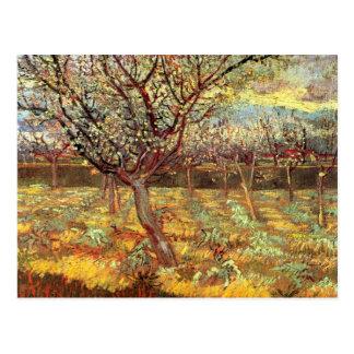 Van Gogh Apricot Tree in Blossom, Vintage Fine Art Postcard