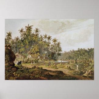 View near Point du Galle, Ceylon Poster