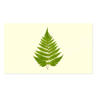 Vintage 1800s Olive Green Fern Leaf Template Pack Of Standard Business Cards