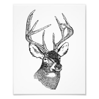 Vintage deer art graphic photograph